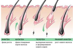 отростание волос схема
