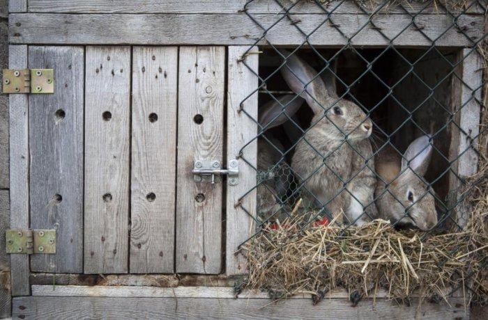 Почему кролики грызут клетки и что делать?