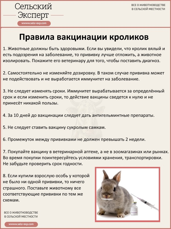 Правила вакцинации кроликов