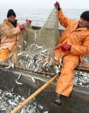 'Как стать рыбаком: подготовка к рыбалке, рекомендации