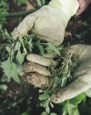 'Специалист по выращиванию сельскохоз